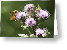A Moth's Feast Greeting Card
