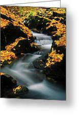 A Mountain Stream Carves A Path Greeting Card
