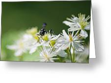 A Nectar Drink For This Black Mud Dauber   Greeting Card