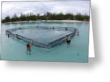A Net For Turtle Research Greeting Card