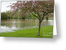 A New Pond Greeting Card
