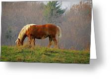 A November Horse Greeting Card