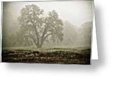 A Old Oak On A Foggy Day  Greeting Card
