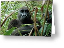 A Once Captive Gorilla Is Now Greeting Card