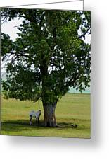 A One Horse Tree And Its Horse Greeting Card