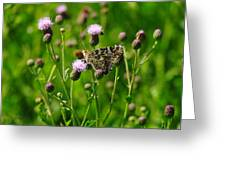 A Painted Lady Greeting Card