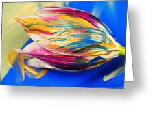 A Painted Tulip. Greeting Card