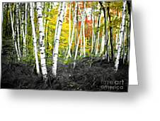 A Painting Autumn Birch Grove Greeting Card
