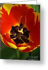 A Painting Red Tulip Greeting Card
