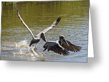A Pair Of Brown Pelicans Greeting Card