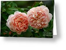A Pair Of Colette Roses Greeting Card