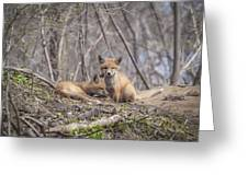 A Pair Of Cute Kit Foxes 2 Greeting Card