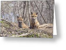 A Pair Of Cute Kit Foxes 3 Greeting Card