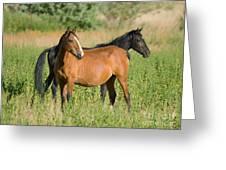 A Pair Of Mustangs Greeting Card