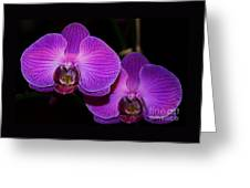 A Pair Of Purple Orchids From Bermuda Greeting Card