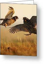 A Pair Of Prairie Chickens Face Greeting Card