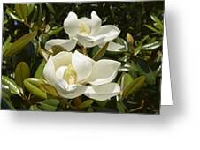 A Pair Of Southern Magnolia Blossoms Greeting Card