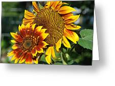 A Pair Of Sunflowers No.1 Greeting Card