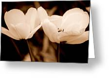 A Pair Of Tulips Greeting Card