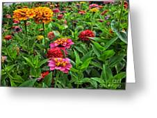 A Pair Of Yellow Zinnias 02 Greeting Card