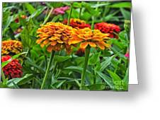 A Pair Of Yellow Zinnias 03 Greeting Card