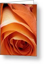 A Pareo Rose Greeting Card