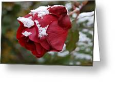A Passing Unrequited - Rose In Winter Greeting Card