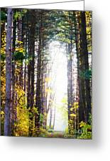 A Path In The Pines Greeting Card