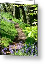 A Path Through An English Bluebell Wood In Early Spring Greeting Card