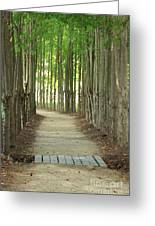 A Path To... Greeting Card