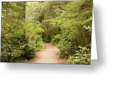 A Path To The Redwoods Greeting Card