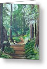 A Peaceful Walk In The Redwoods Greeting Card