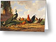 A Peacock And Chickens In A Landscape  Greeting Card
