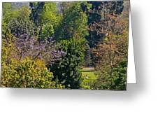 A Peek Through The Trees Greeting Card
