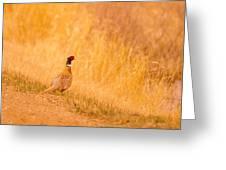 A Pheasant  Greeting Card