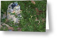 A Photo Of My Flower Garden  Greeting Card