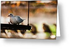 A Pigeon In A Cage Greeting Card