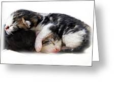 A Pile Of Pussies Greeting Card