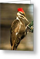 A Pileated With Intent Greeting Card