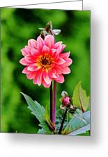 A Pink Flower Greeting Card