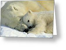 A Polar Bear And Her Cub Napping Greeting Card