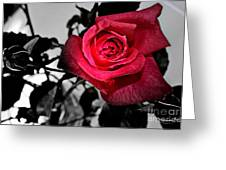 A Pop Of Red - Rose  Greeting Card
