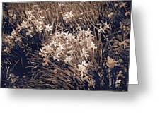 Clusters Of Daffodils In Sepia Greeting Card