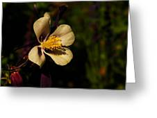 A Pretty Flower In The Sun Greeting Card