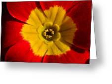 A Prim Rose Greeting Card