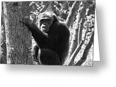 A Primate Greeting Card