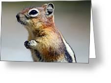 A Profile In Chipmunk Greeting Card