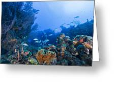 A Quiet Underwater Day Greeting Card