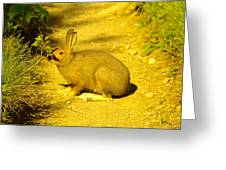A Rabbit In My Path Greeting Card