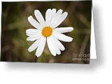 A Rain Spattered Daisy Greeting Card